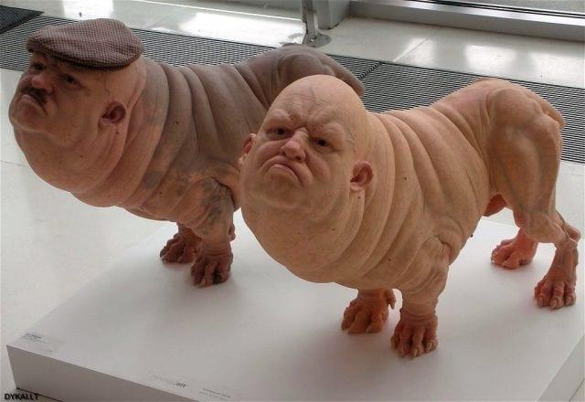 Human organs in Pigs