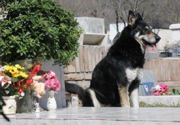Argentine Dog